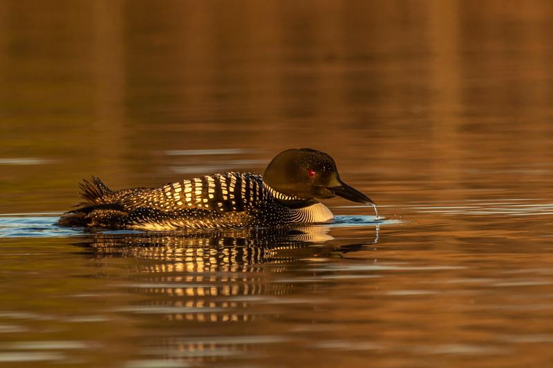 Dribbling beak