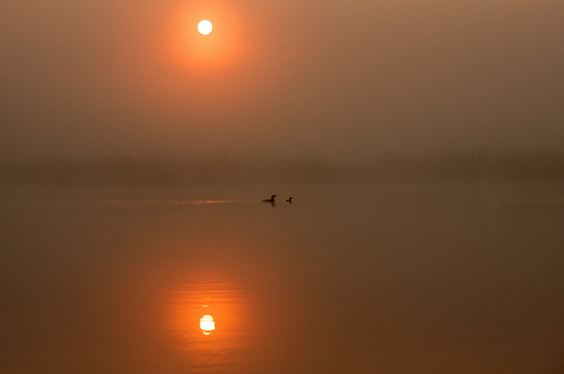 Loons and rising sun