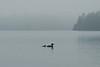 ACL-10142: Misty morning swim