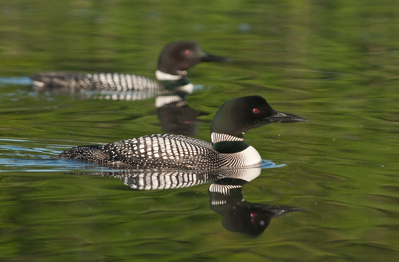 ACL-10039: Loon reflections
