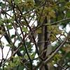 Garden warbler again?