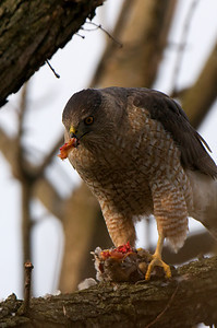 Female eating.