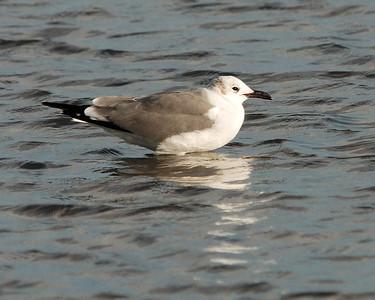 Goose Island 012009 122