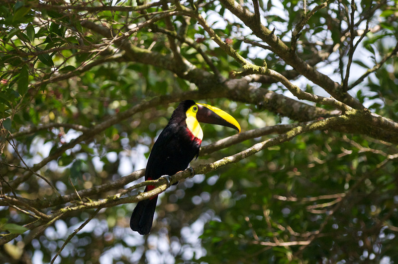 Costa Rica Day 3