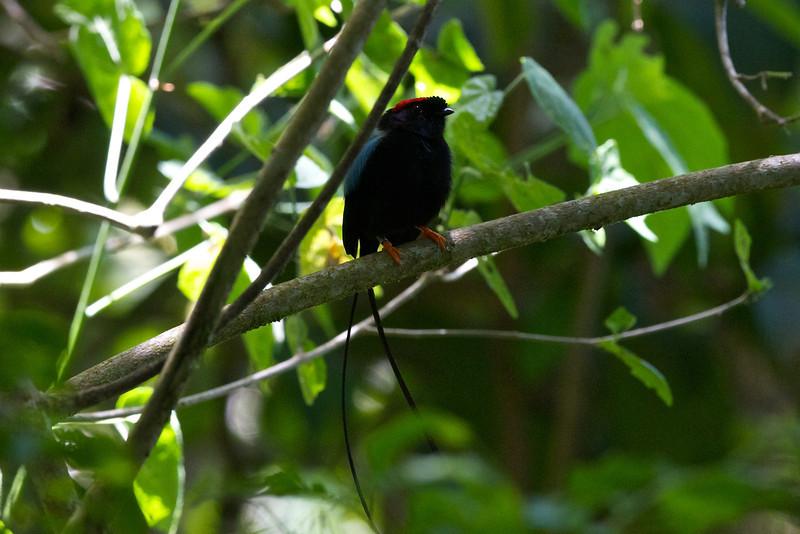 Costa Rica Day 7