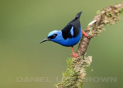 Costa Rica, Tropical Bird Photography tour, 2017