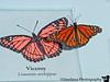 August 6, 2011 - butterfly flutterby