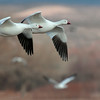 Synchronized flying geese