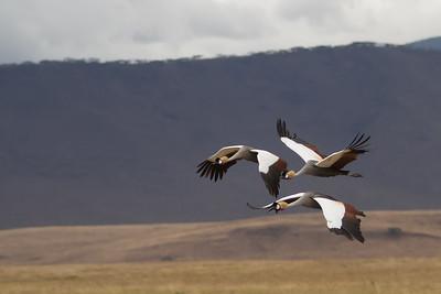 - Ngorongoro Crater, Tanzania