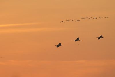 - Bird Haven Ranch, Butte City, CA, USA