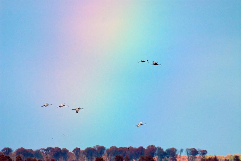 ASC-9350: Sandhills over the rainbow