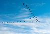 V for Cranes