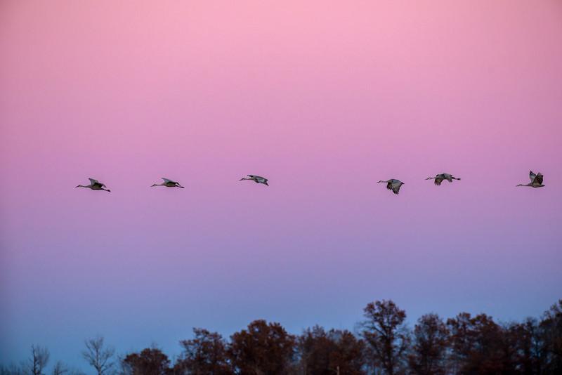 Twilight Cranes