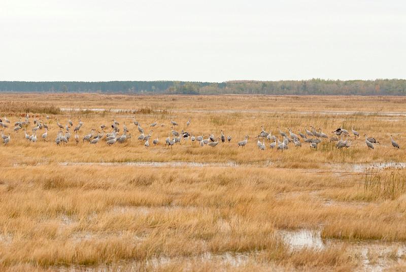 ASC-9012: Feeding in wetland