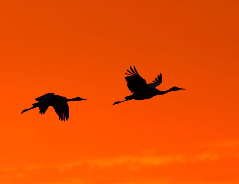 Crane Silouette at Sunset