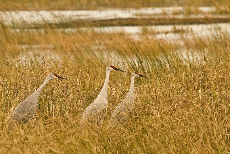 ASC-8052: Sandhills in wetland
