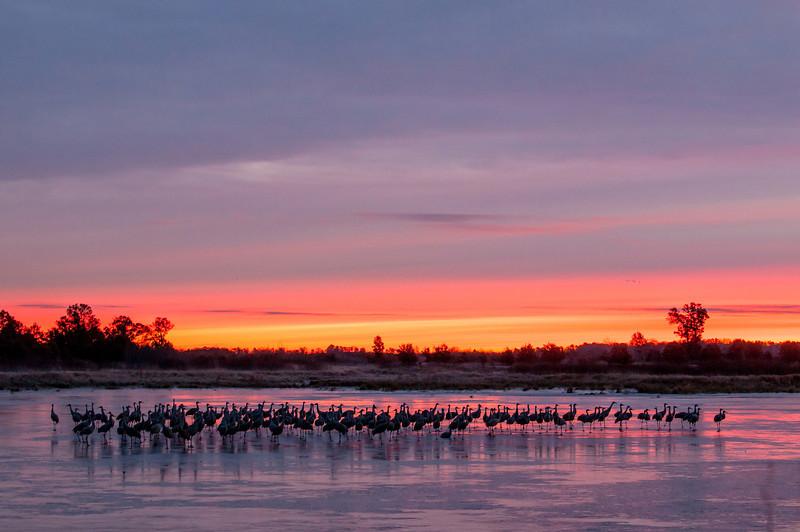 Cranes on ice at sunrise