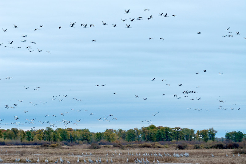 ASC-9047: October at Crex Meadows WMA