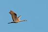 ASC-10049: Lone crane