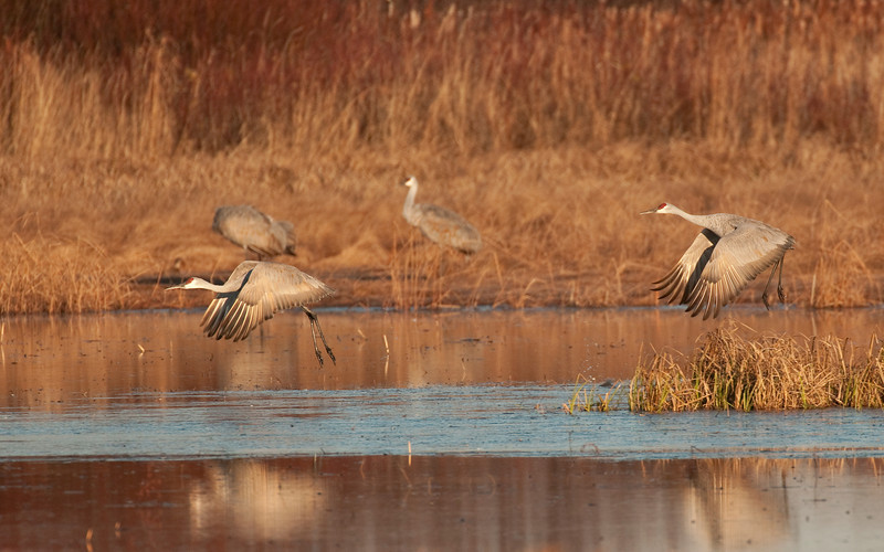 ASC-9332: Sandhills and reflections