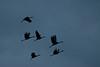 ASC-10157: Crane silhouettes