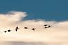 Cranes through the clouds