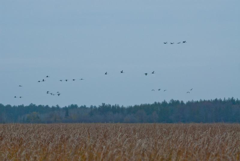 ASC-10162: Cranes flying over Fish Lake WMA