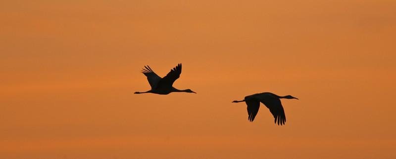 ASC-9089: Evening twilight flight