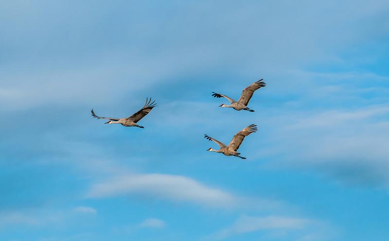 Crane trio in the clouds