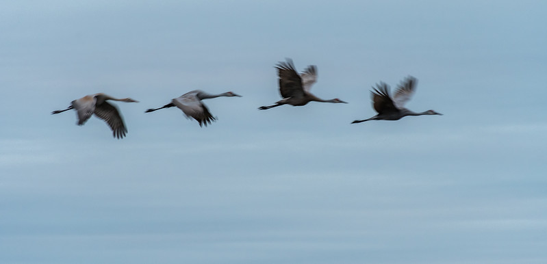Cranes in motion