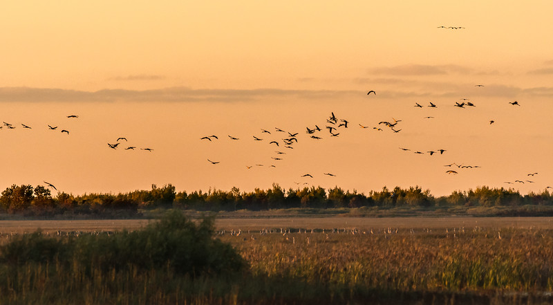 Crex Meadows WMA in October