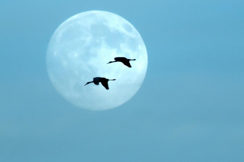 ASC-10124: Cranes and full moon