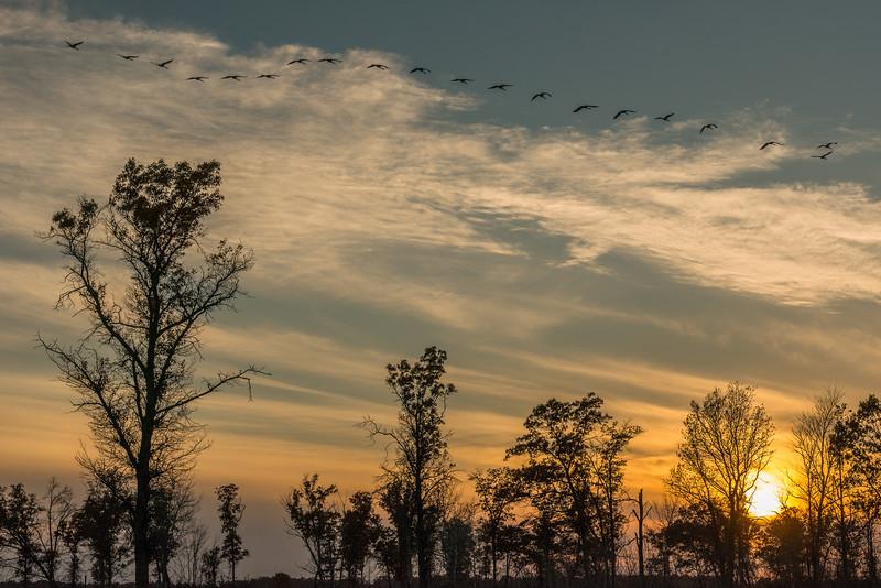 Sunrise Cranes