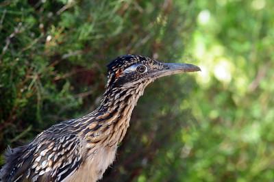 San Vincente Resorvoir, Lakeside, CA 08/19/2009