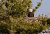 BAEA nest-8264