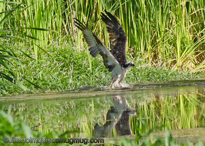 Bird Flight and Action