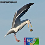 """""""Z"""" is for Ziploc bags<br /> <br /> In the past I have had a hard time posting pictures that weren't about birds but this one is mostly about sandwich bags. I think I've grown."""