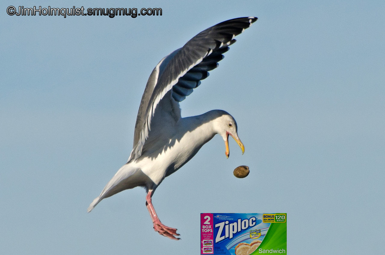 """Z"" is for Ziploc bags<br /> <br /> In the past I have had a hard time posting pictures that weren't about birds but this one is mostly about sandwich bags. I think I've grown."