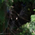 Spider web - near Olympia, Wa. Taken in 2012.