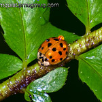 Lady Bug - after a rain near Olympia, Wa. Taken in October.