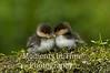 Duckling buddies