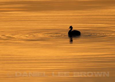 Salton Sea Recreation Area, Riverside  Co, CA