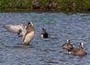 Ducks2847