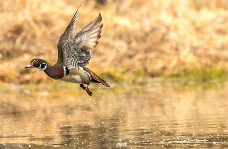 Woodie Drake take off