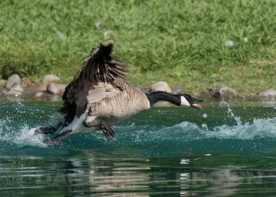 Elk Grove Regional Park