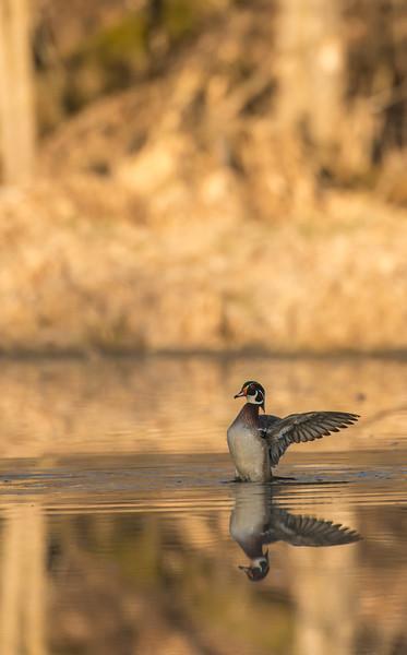 Drake Woodie wing flap