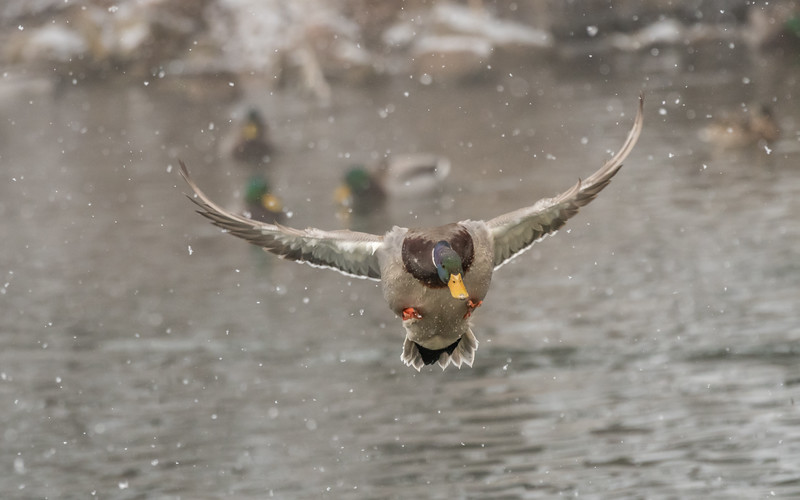 Flying through the snow