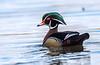 Alert Drake Wood Duck