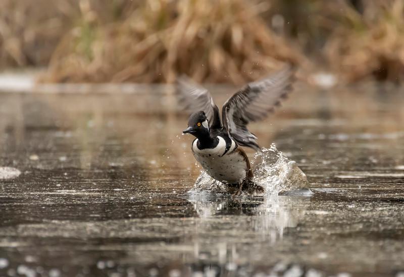 Drake Hoodie taking flight