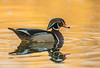 Drake Woodie on golden pond